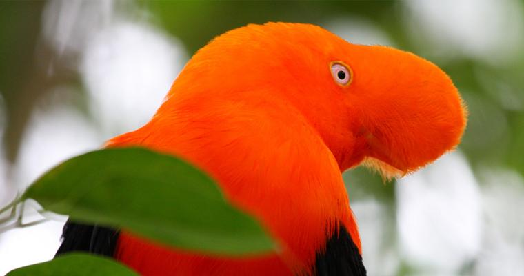 Orange Beakless Bird