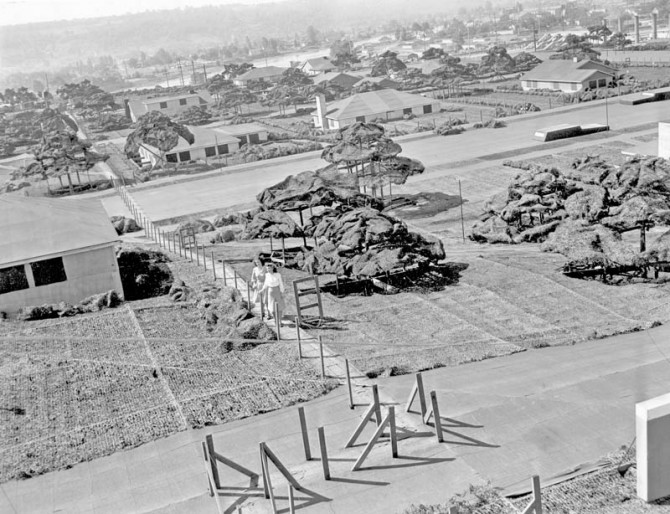 Camouflaged Town - Boeing Plant 2