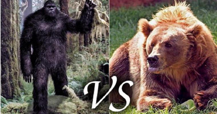 Yeti Vs Bear