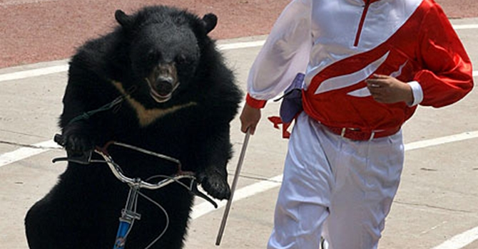Bear Riding Bike China