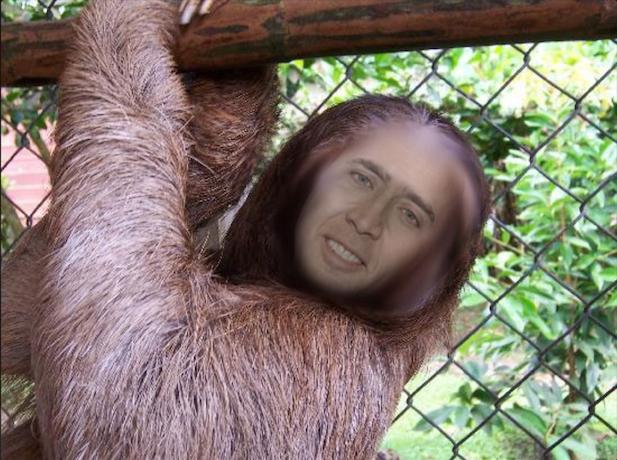 Nicolas Cage Sloth