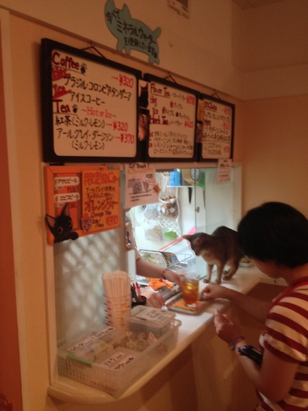 cat cafe 10