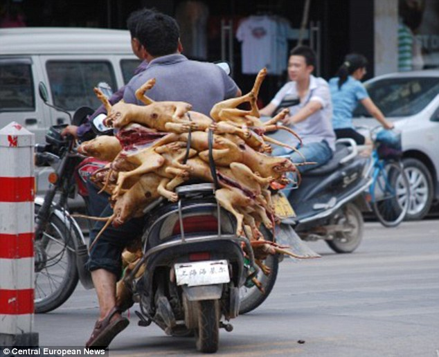 Chinese Dog Meat Festival - Dog Bodies On Bike