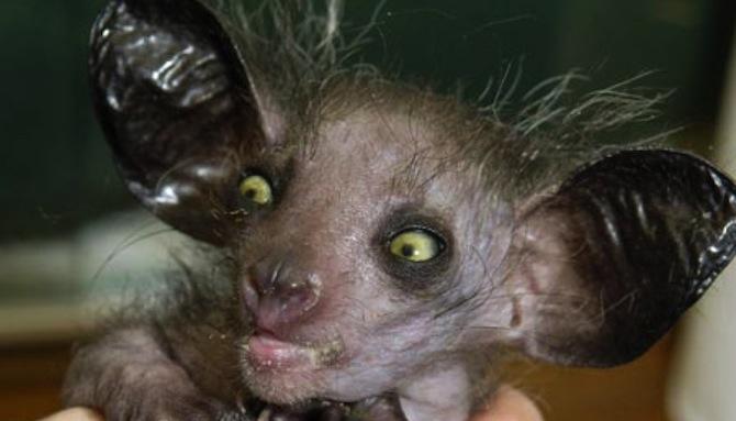 Ugly Animal