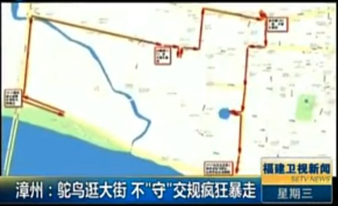 OSTRICH CHINA