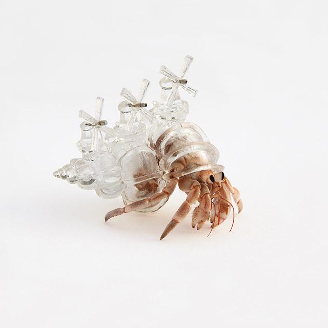 Translucent Hermit Crab Shells Adorned With Model ... Hermit Crab Art