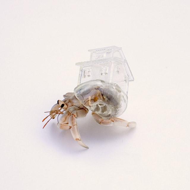 Hermit Crab Art 7