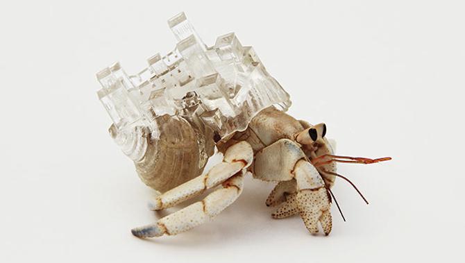 Hermit Crab Art Featured
