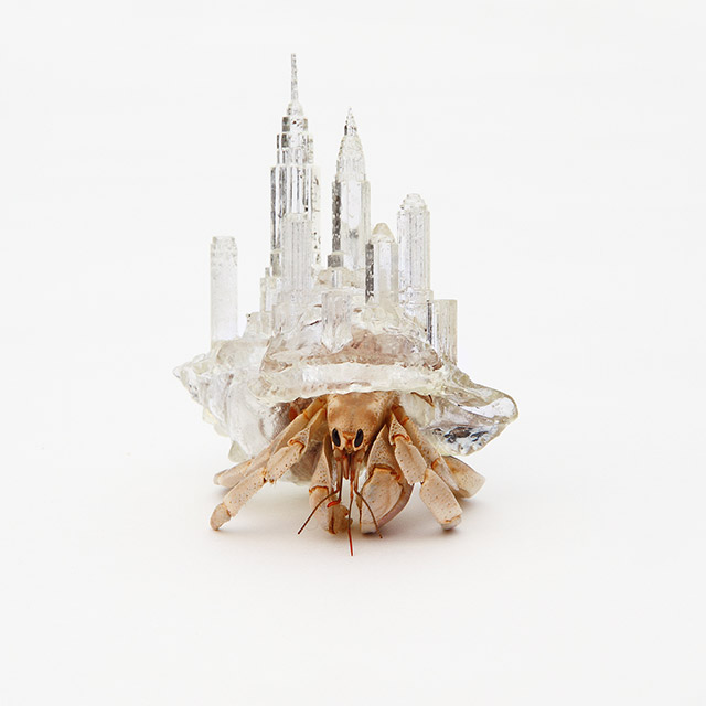 Hermit Crab art 1