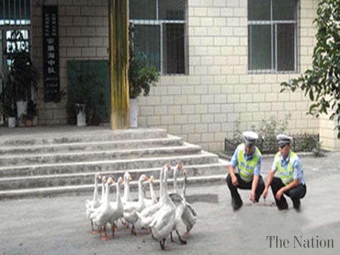 CHINA GEESE