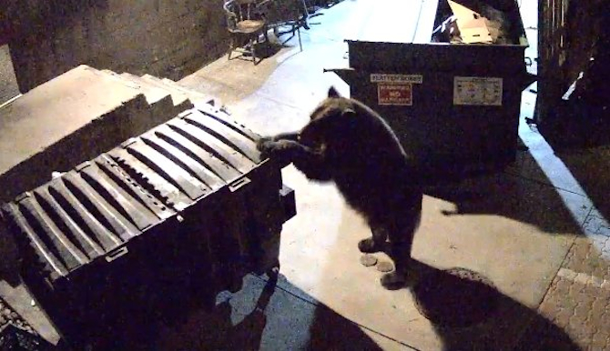 Bear Steals Dumpster