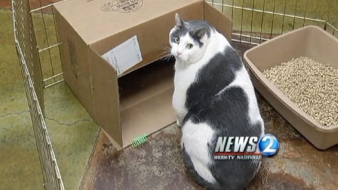 Buddha 31 Pound Cat 4
