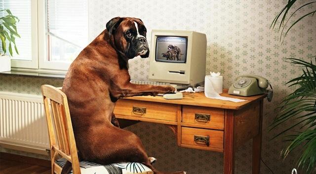 Dog Wi-Fi
