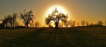 Seeping Tree