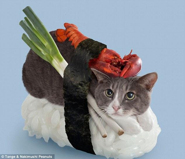 sushi cat 1