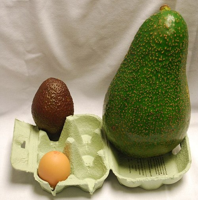 avozilla - photo #1