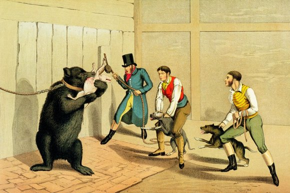 The Brutality Of Bear Baiting Past Amp Present Sick Chirpse