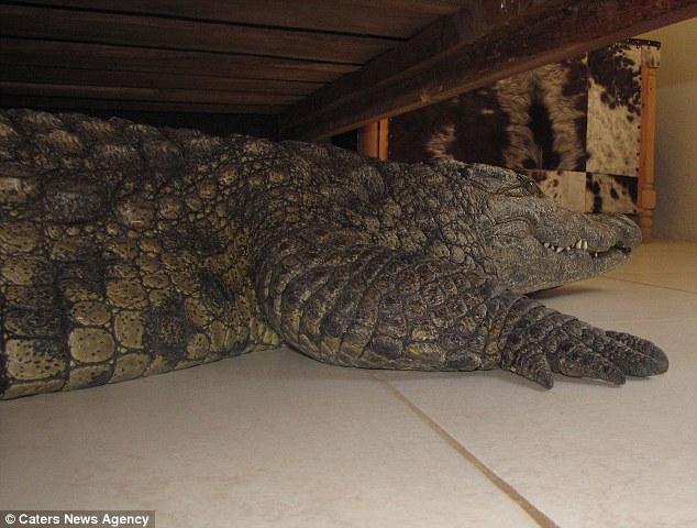 Crocodile Under Bed 3