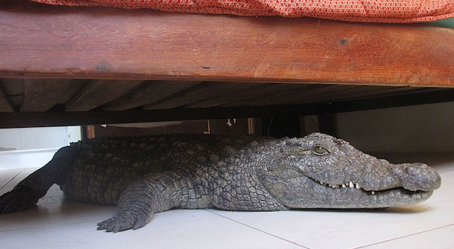 Crocodile Under Bed Featured
