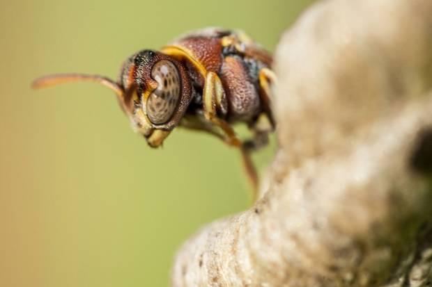 killer hornet 3