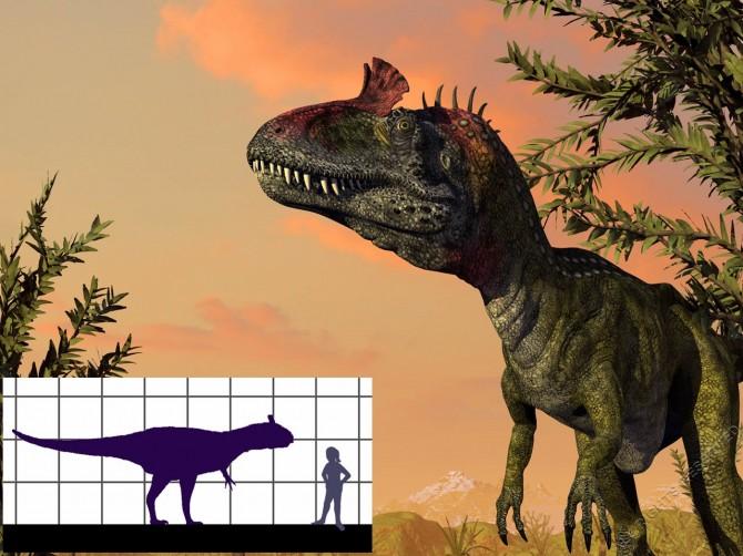 Dinosaur - Weirdest Strangest Coolest - Cryolophosaurus - Large Frill