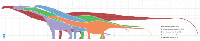 Dinosaur - Weirdest Strangest Coolest - Longest