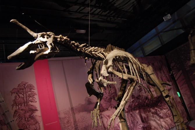 Dinosaur - Weirdest Strangest Coolest - Tsintaosaurus - Skeleton
