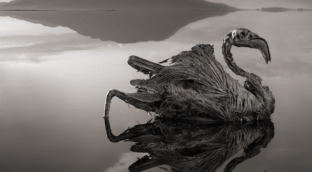 Lake Natron Featured
