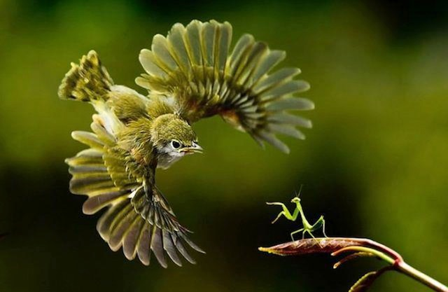 Perfectly Timed Animal Shots 1