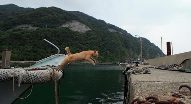 Tashirojima - Japan Cat Island - Boat Jump