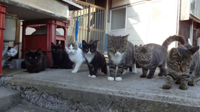 Tashirojima-Japan-Cat-Island-Cat-Gang-67