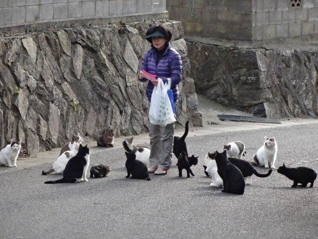 Tashirojima - Japan Cat Island - Resident Feeding 2