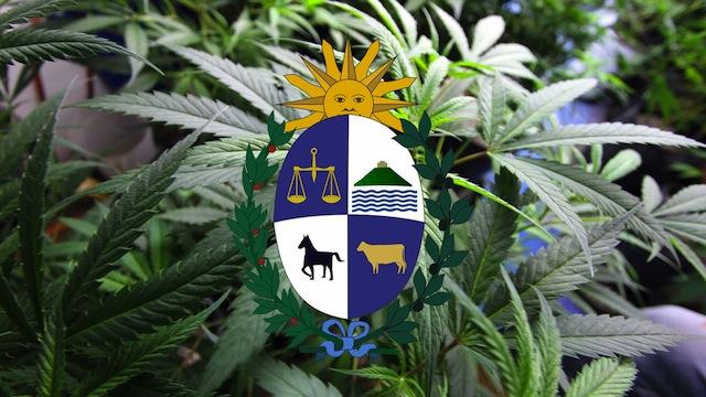 legal uruguay weed