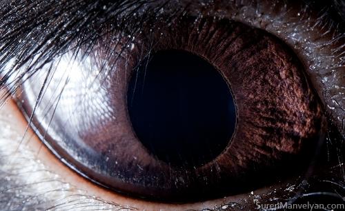 Eyes - Close Up Photos - Suren Manvelyan - Black Rabbit
