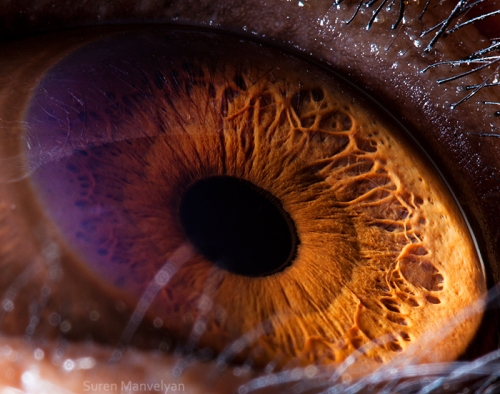 25 Amazing Close Up Photos Of Animals Eyes Page 2