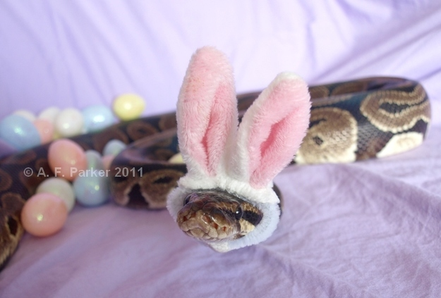 Snakes In Hats 17