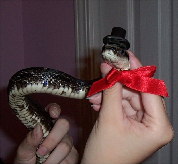 Snakes In Hats 18