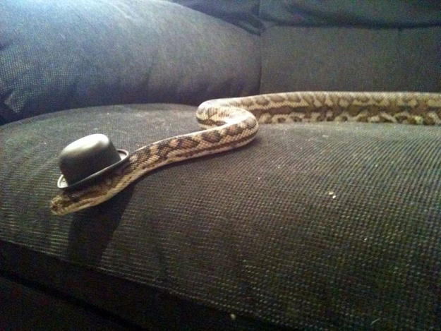 Snakes In Hats 19