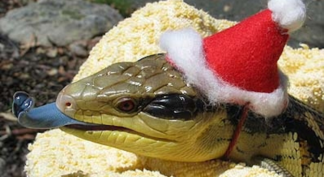 Snakes In Hats Featured