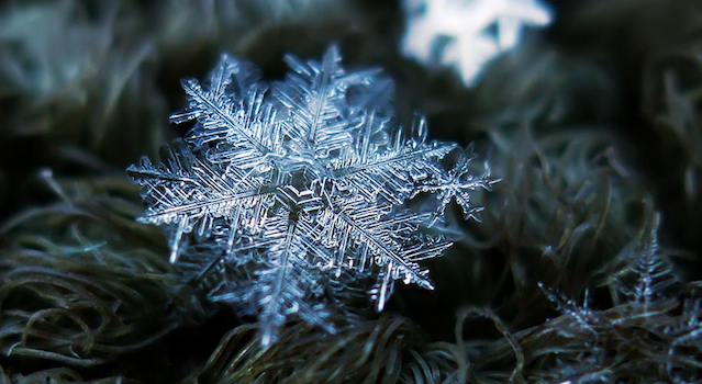 Snowflake Photography Featured