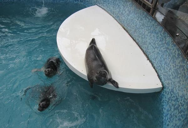 Weird Theme Restaurant - China - Tang Du Zoology seals