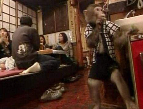Weird Theme Restaurant - Monkey Waiter - Kayabukiya tavern, Japan