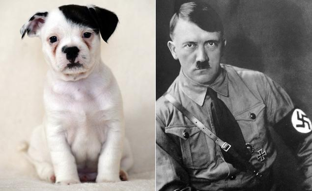 patch hitler dog3
