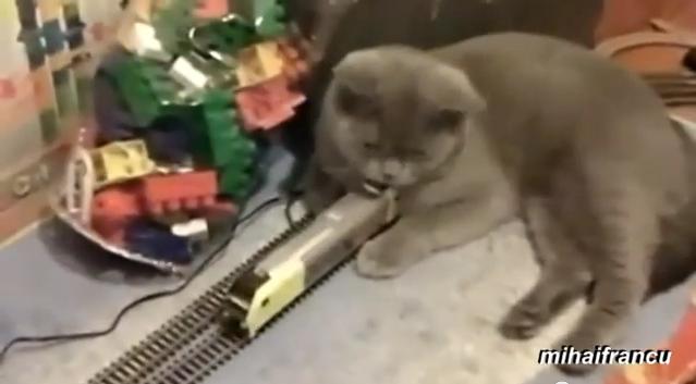 Cats Vs Toys
