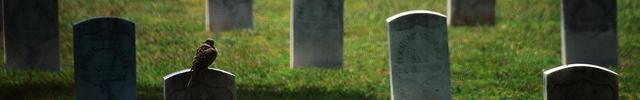 Gravestones Weird - montage 1