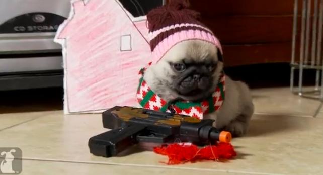 Home Alone Pugs