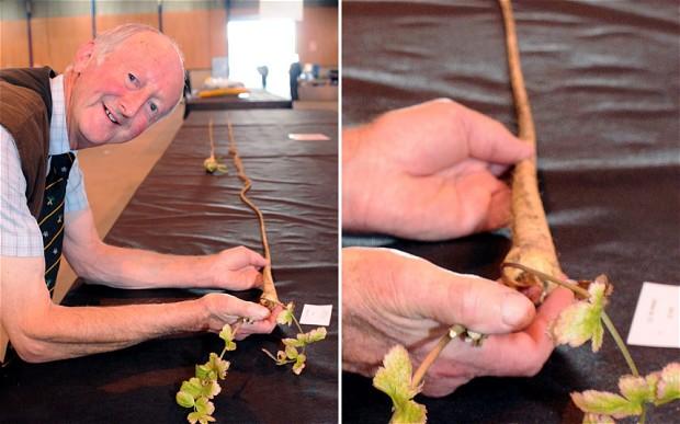 Longest Weirdest - Peter Glazebrook parsnip