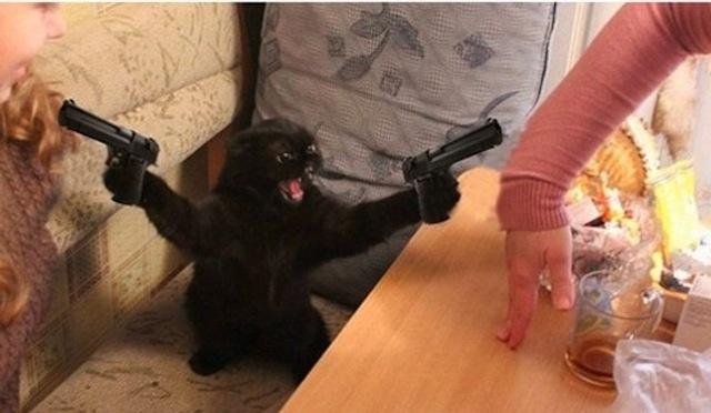 cat guns