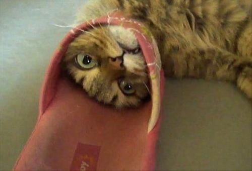 cat stuck