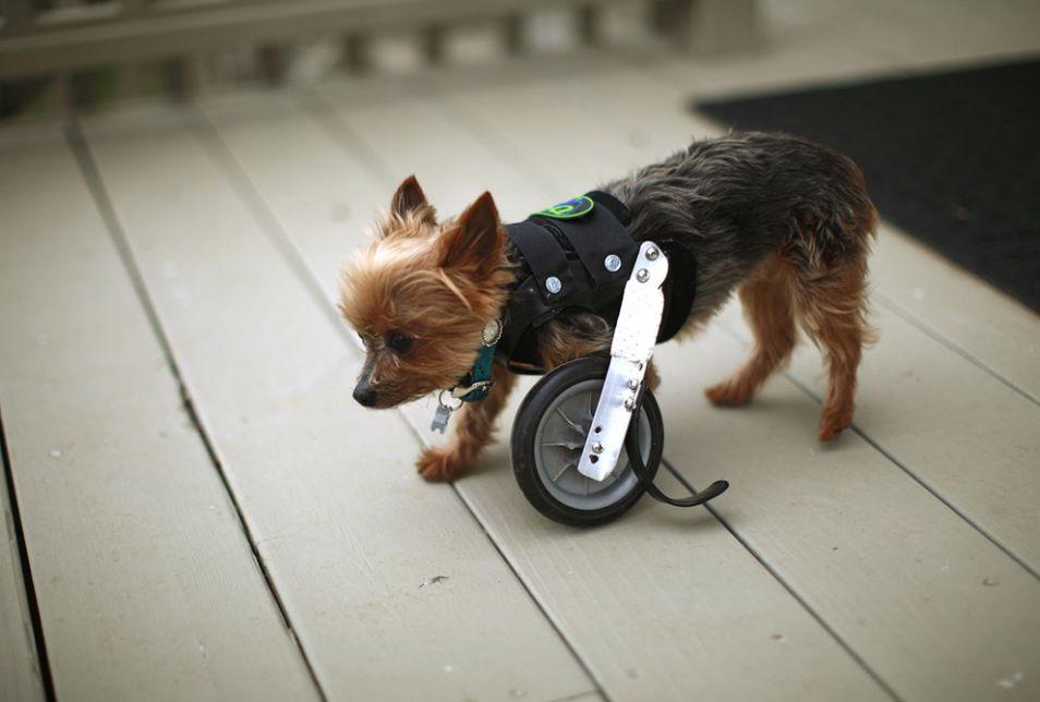 dog wheel leg